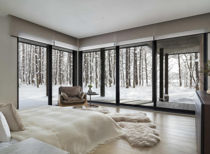 Silver birch forest frames your view in Niseko